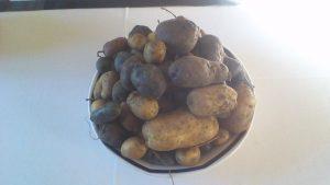 Patates Ste Thérèse