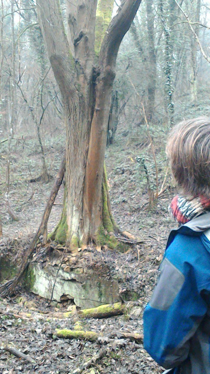 Découverte de la nature en hiver - Les Incroyables Messins - Les ...